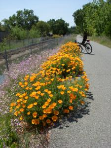One of my best guerrilla gardening projects, on a major bike & walking trail.
